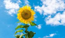 Torna il bel tempo nel fine settimana in Lombardia | Previsioni meteo
