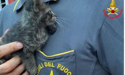 Cade dalla finestra e si incastra in una intercapedine: le dolci foto del gattino salvato dai pompieri