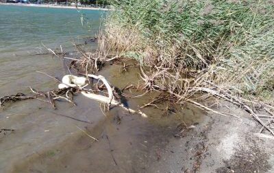 Pitone di 4 metri ritrovato sull'Alto Lago, incredibile