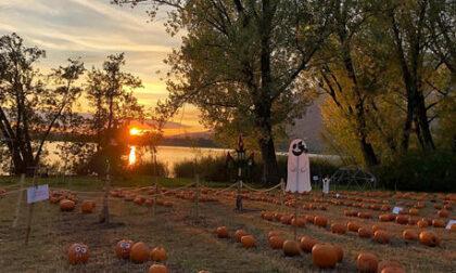 Halloween ma non solo: i più bei campi di zucche da visitare nel nostro territorio